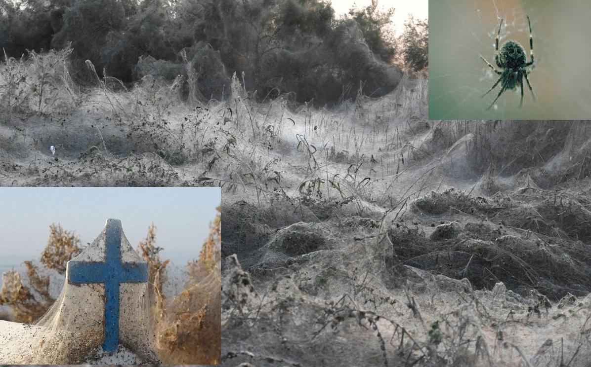 Грецию продолжают атаковать тысячи пауков