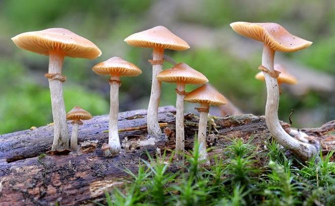 как не съесть ядовитый гриб