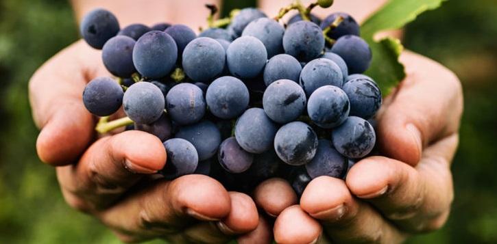 винотерапия лечение 21 века