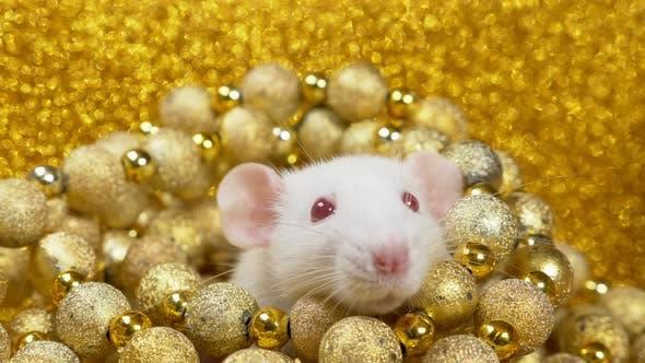 чем опасен 2020 год Белой Крысы