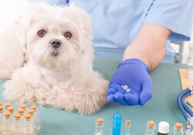 Аферы ветеринаров