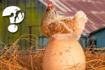 Яйцо или курица – что первостепенно? Загадка разгадана