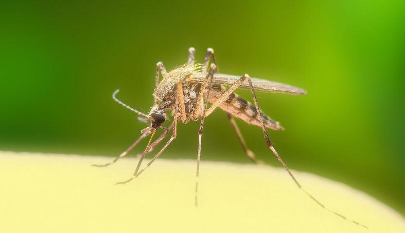 Почему комары одних людей кусают больше