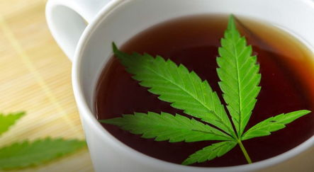 7 причин начать пить чай с каннабисом